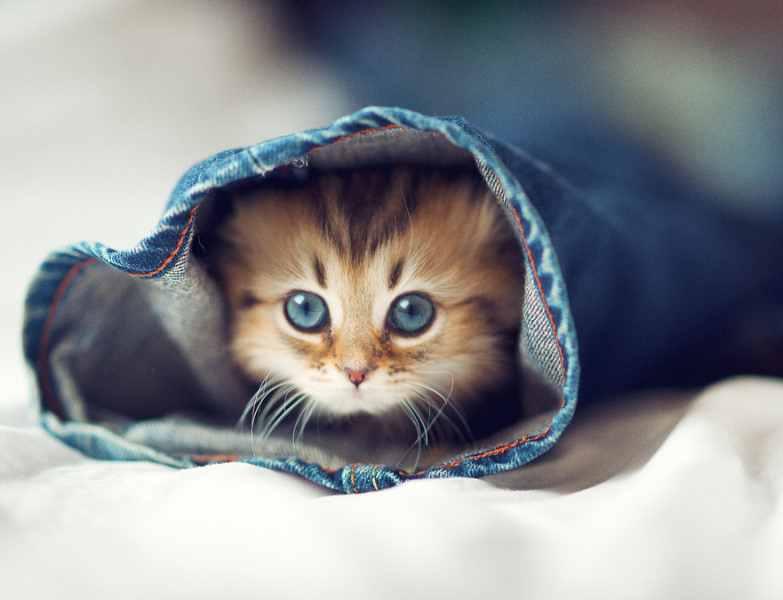 壁纸 动物 猫 猫咪 小猫 桌面 783_600