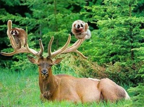 趣味摄影:爆笑可爱的动物